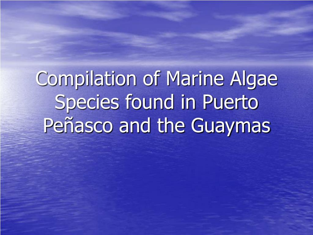 compilation of marine algae species found in puerto pe asco and the guaymas