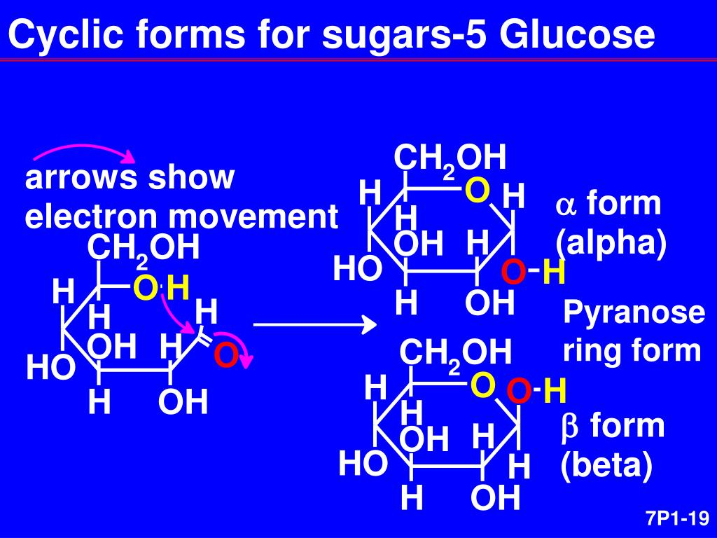 Cyclic forms for sugars-5 Glucose