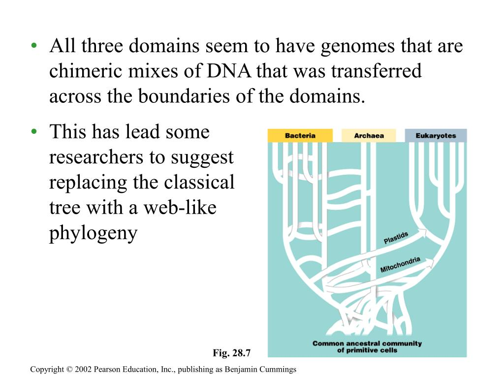 All three domains seem to have genomes that are chimeric mixes of DNA that was transferred across the boundaries of the domains.