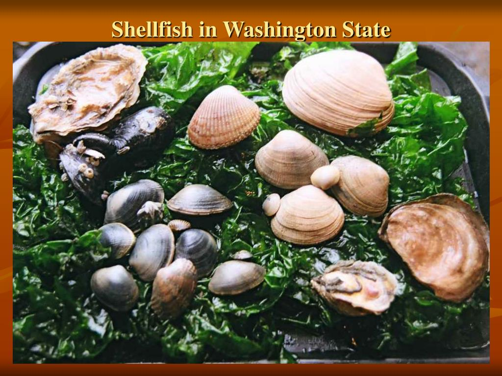 Shellfish in Washington State