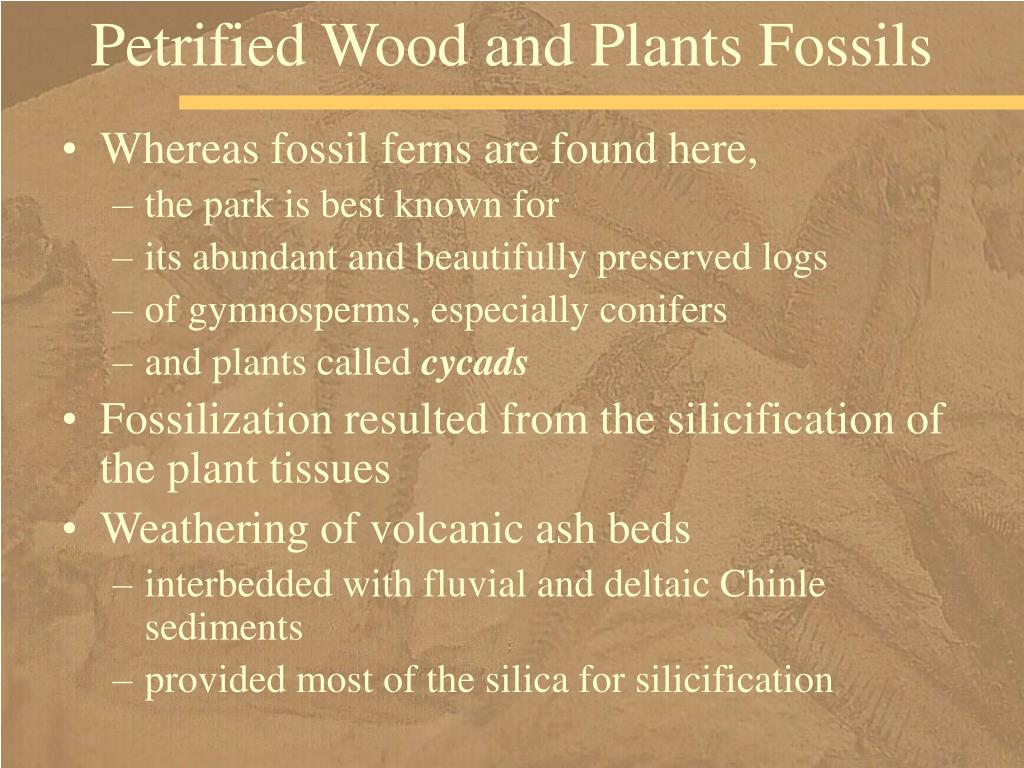 Petrified Wood and Plants Fossils