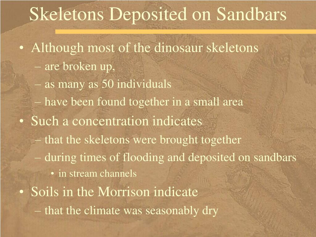 Skeletons Deposited on Sandbars