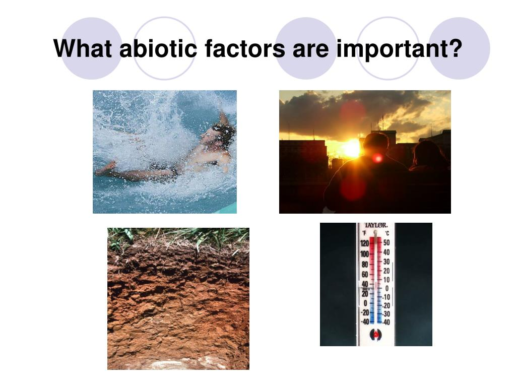 why abiotic factors are important Biology forum online - discuss microbiology, biological science, microscopic forms of life, including bacteria, archea, protozoans, algae and fungi topics also relate to viruses, viroids, prions and more biological science forum online.