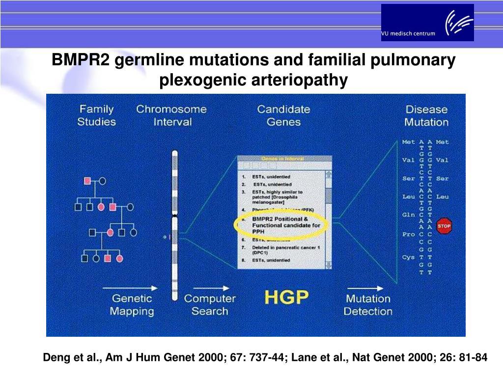 BMPR2 germline mutations and familial pulmonary plexogenic arteriopathy