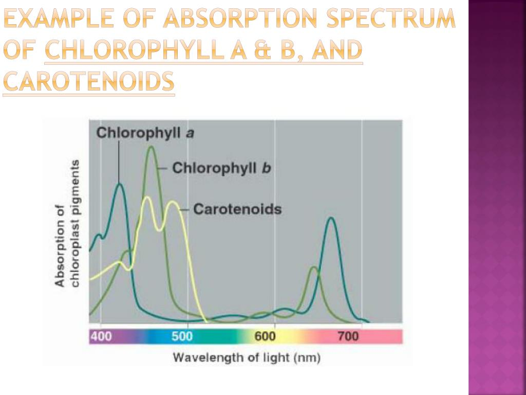 Example of absorption spectrum of