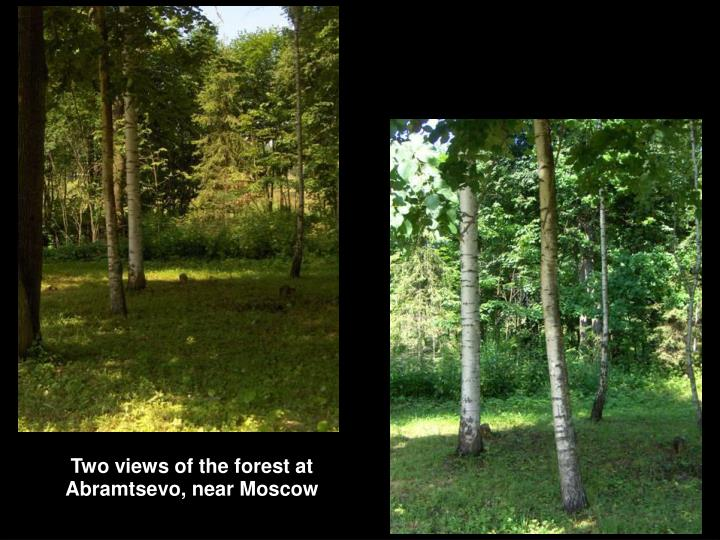 Two views of the forest at Abramtsevo, near Moscow