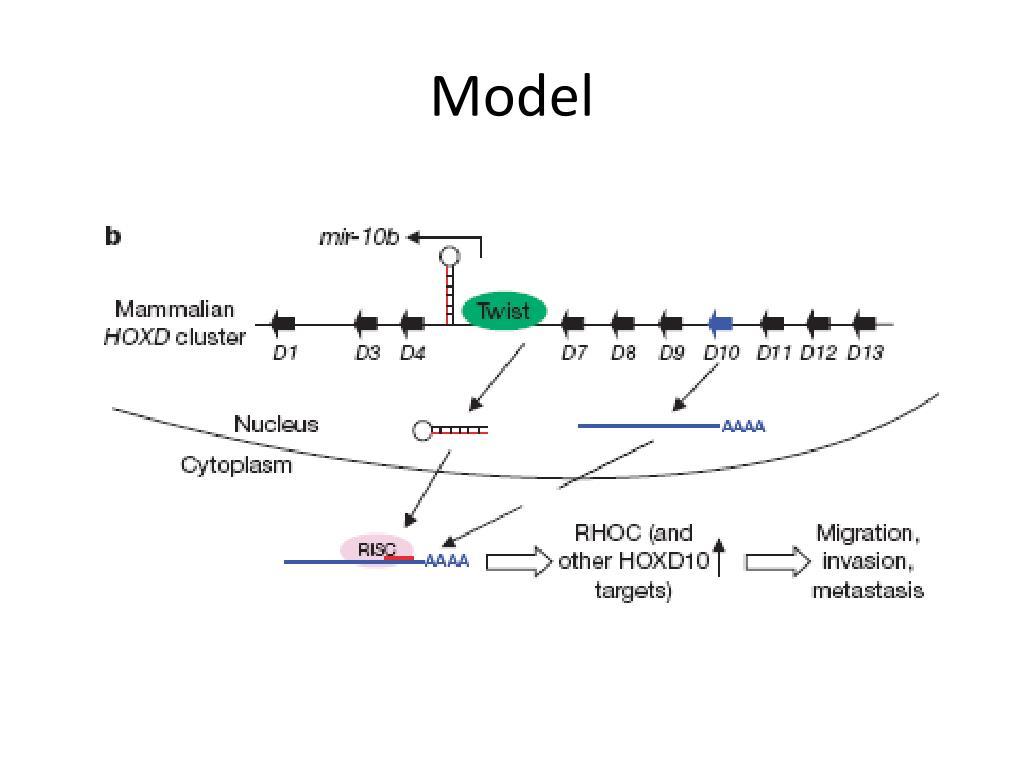 Endogenous human micrornas that suppress breast cancer metastasis