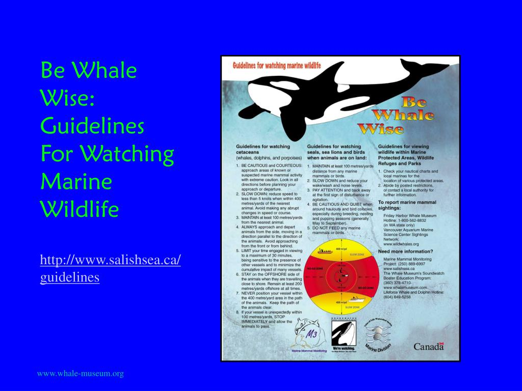 Be Whale Wise: Guidelines For Watching Marine Wildlife