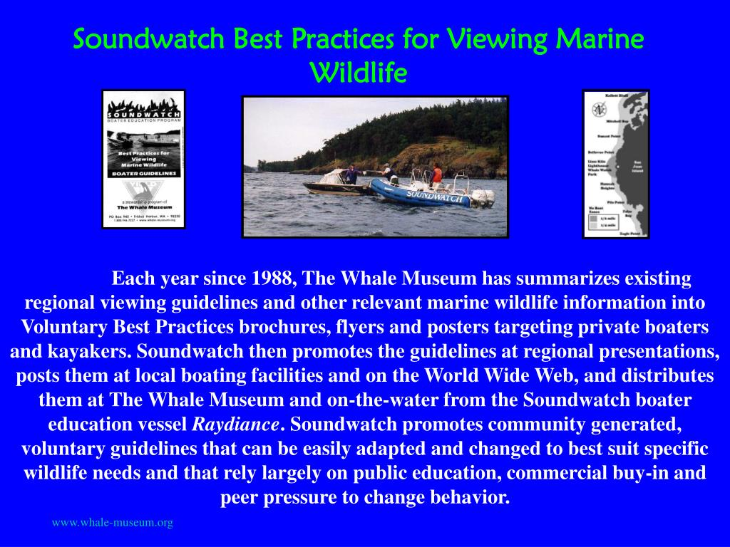 Soundwatch Best Practices for Viewing Marine Wildlife