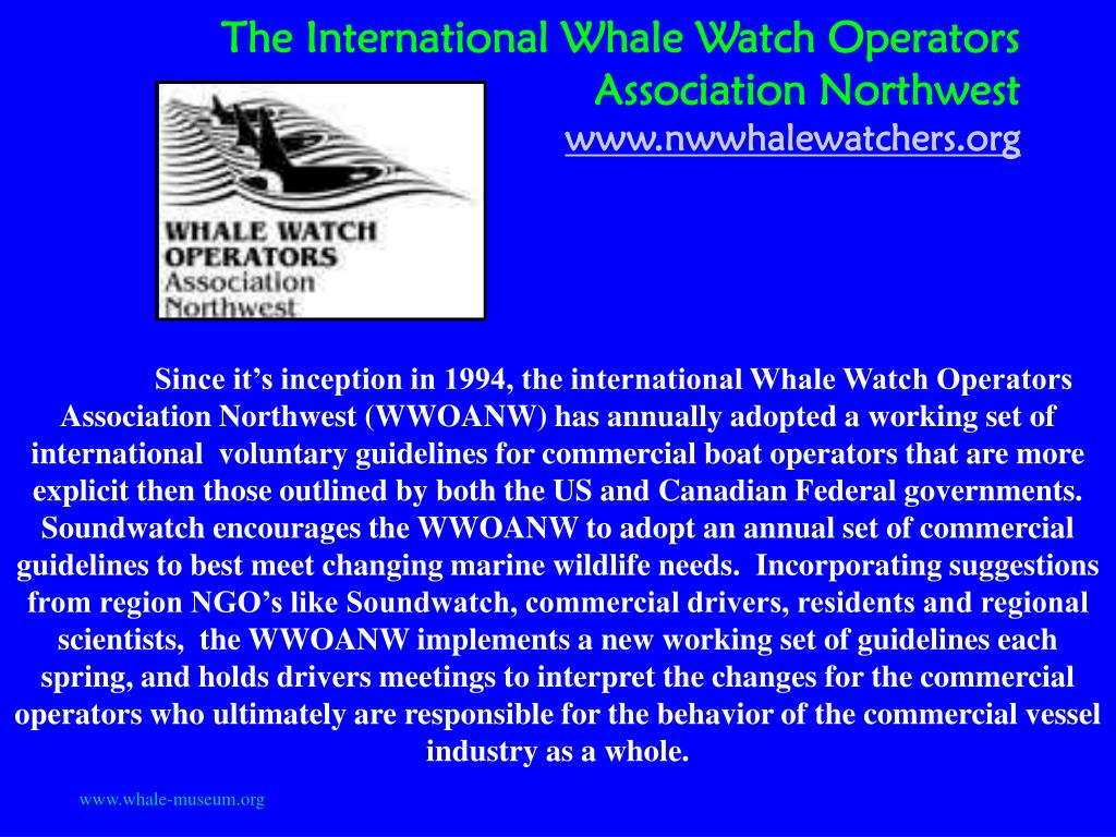 The International Whale Watch Operators Association Northwest