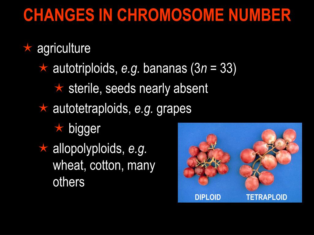 CHANGES IN CHROMOSOME NUMBER