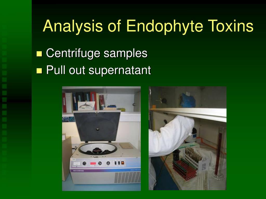 Analysis of Endophyte Toxins