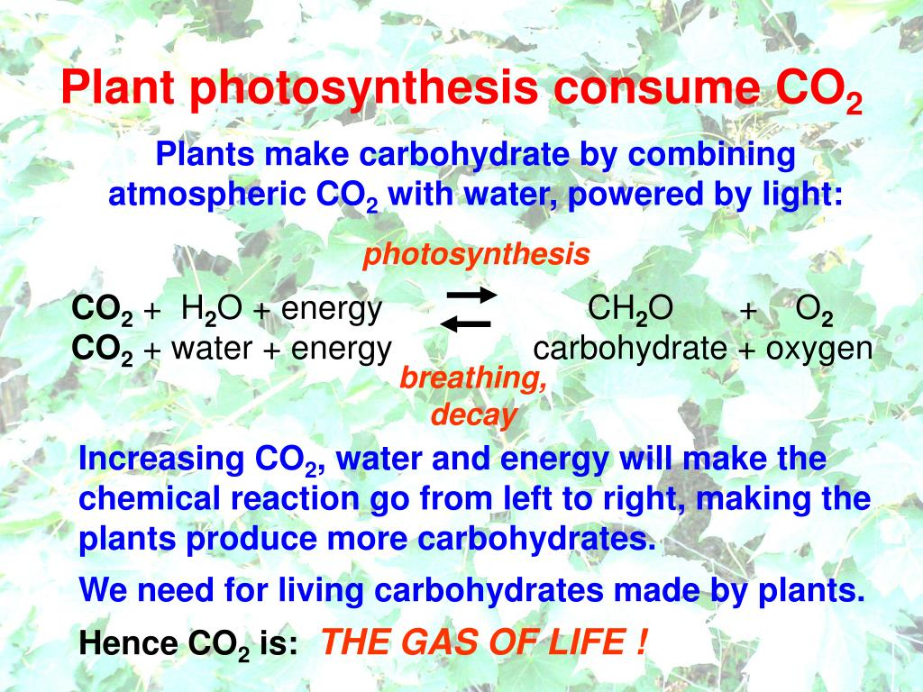 Plant photosynthesis consume CO