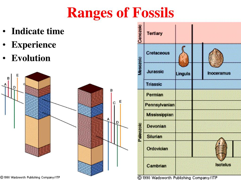 Biostratigraphic Sentence Examples
