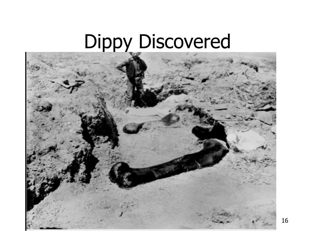 Dippy Discovered