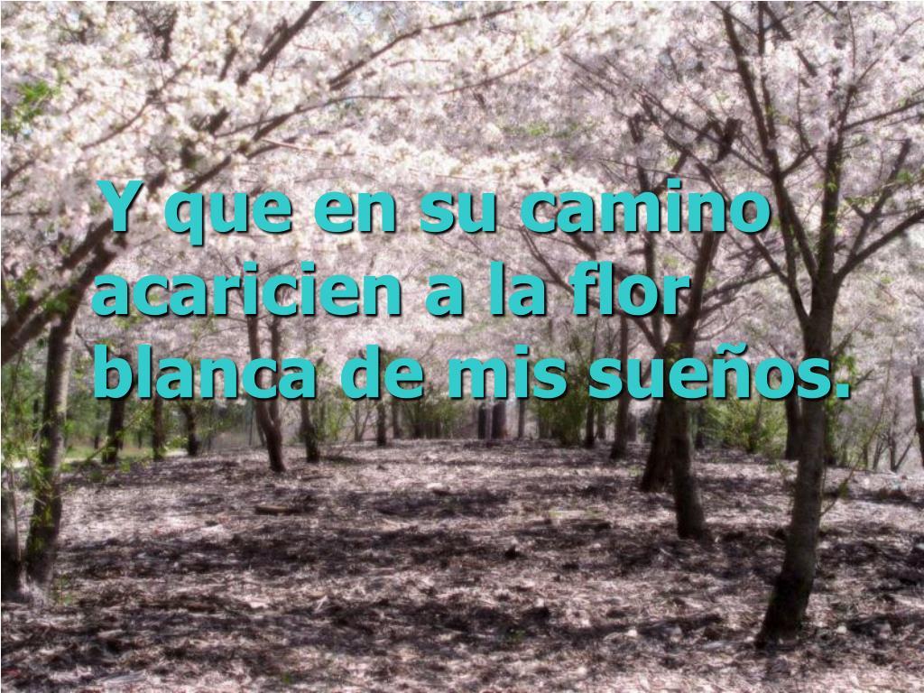 Y que en su camino acaricien a la flor blanca de mis sueños.