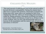 challenge five wildlife