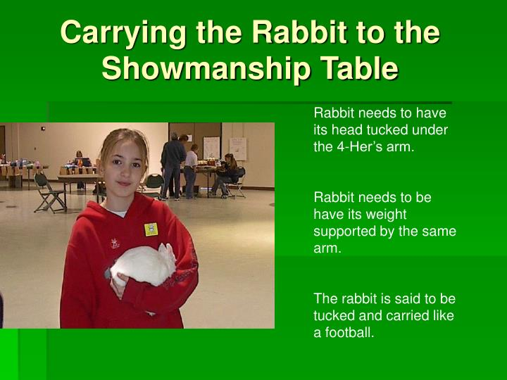 Carrying the Rabbit to the Showmanship Table