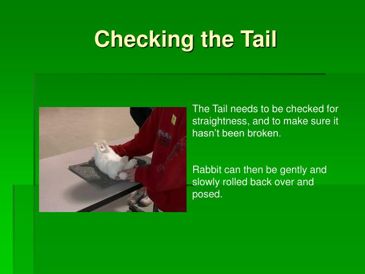 Checking the Tail