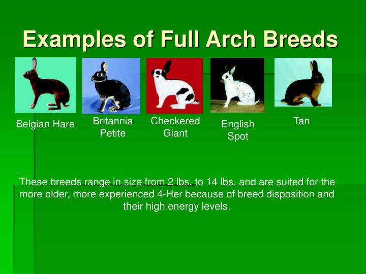 Examples of Full Arch Breeds