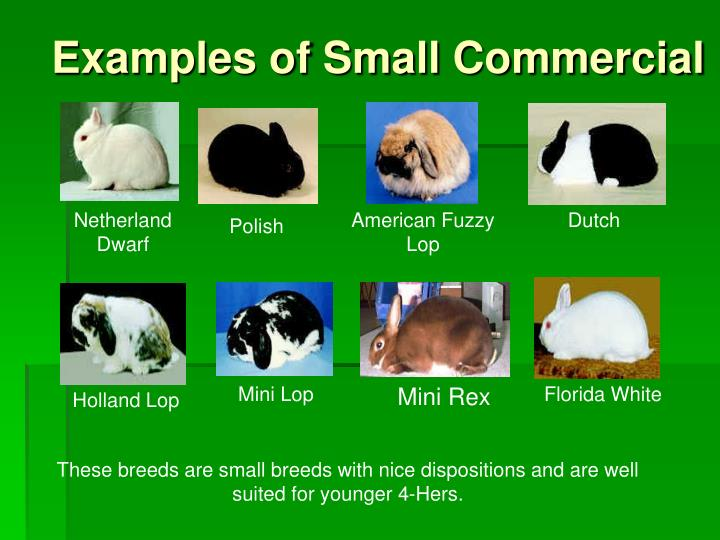 Examples of Small Commercial