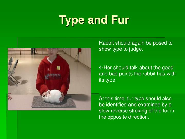 Type and Fur