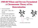 1905 08 wilson and stevens formulated a chromosome theory of sex determination
