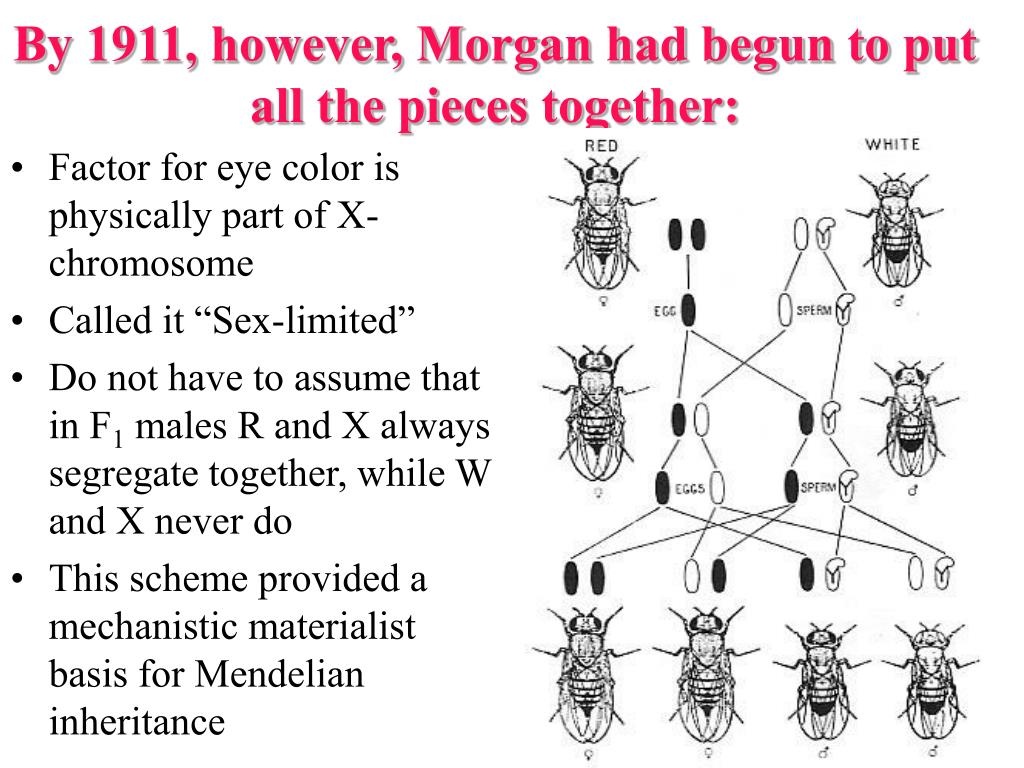 By 1911, however, Morgan had begun to put all the pieces together: