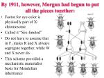 by 1911 however morgan had begun to put all the pieces together