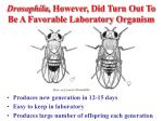 drosophila however did turn out to be a favorable laboratory organism