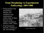 from morphology to experimental embryology 1891 1900