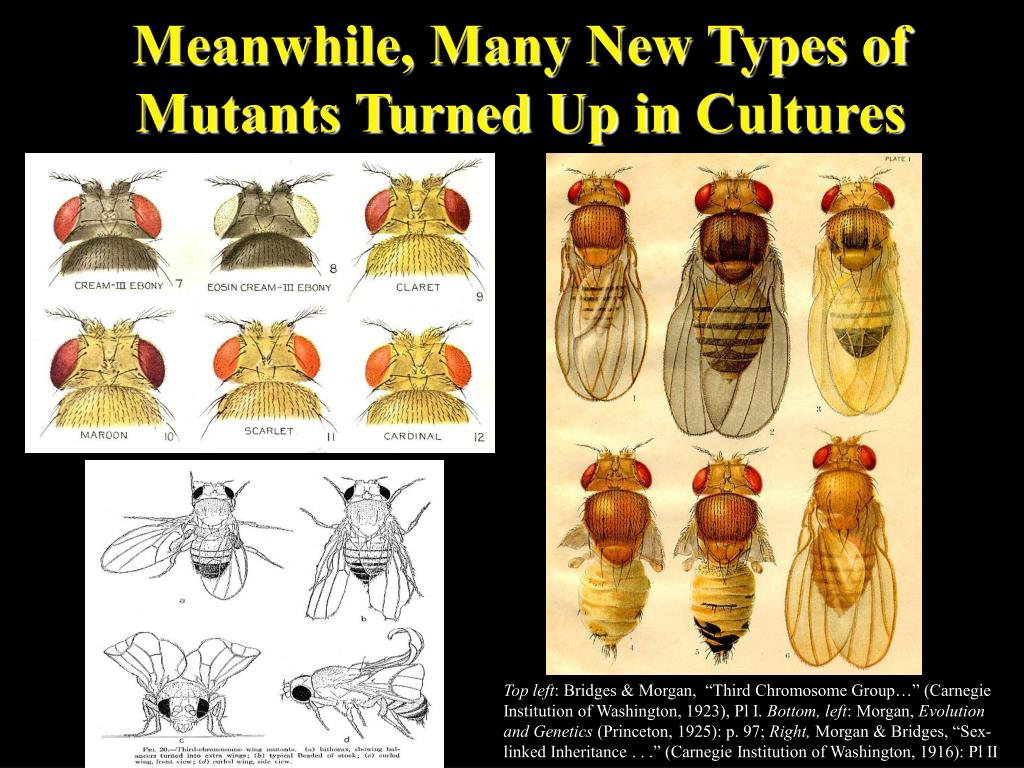 Meanwhile, Many New Types of Mutants Turned Up in