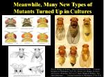 meanwhile many new types of mutants turned up in cultures