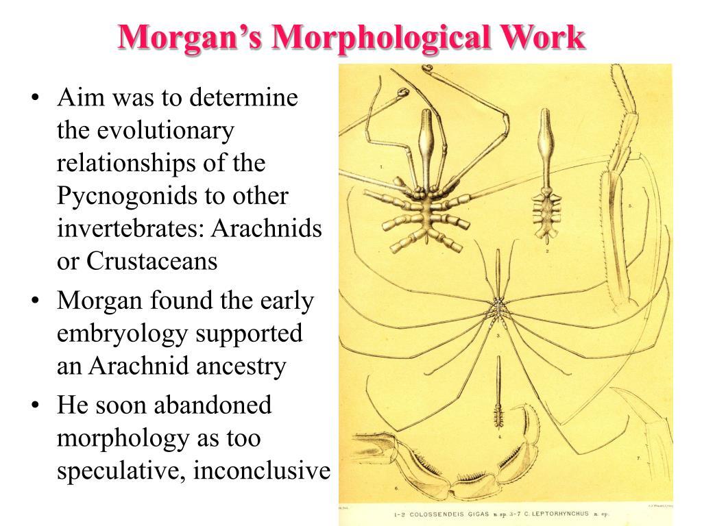 Morgan's Morphological Work