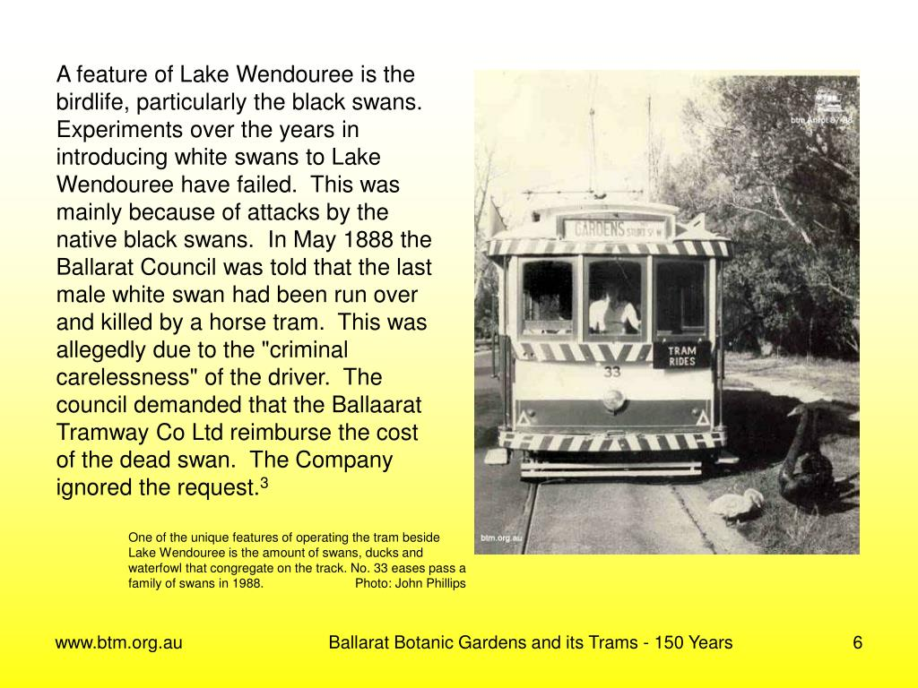 A feature of Lake Wendouree is the