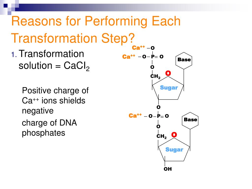 Reasons for Performing Each Transformation Step?