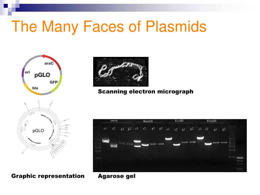 The Many Faces of Plasmids