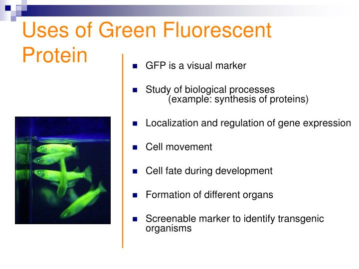 Uses of gfp