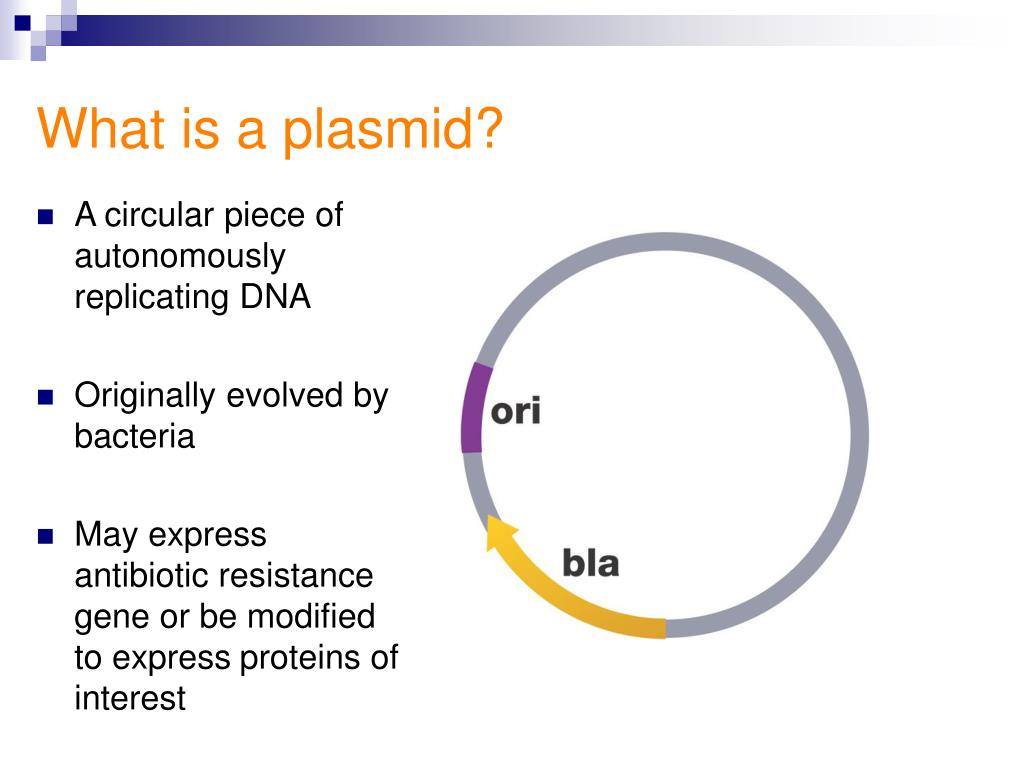 What is a plasmid?