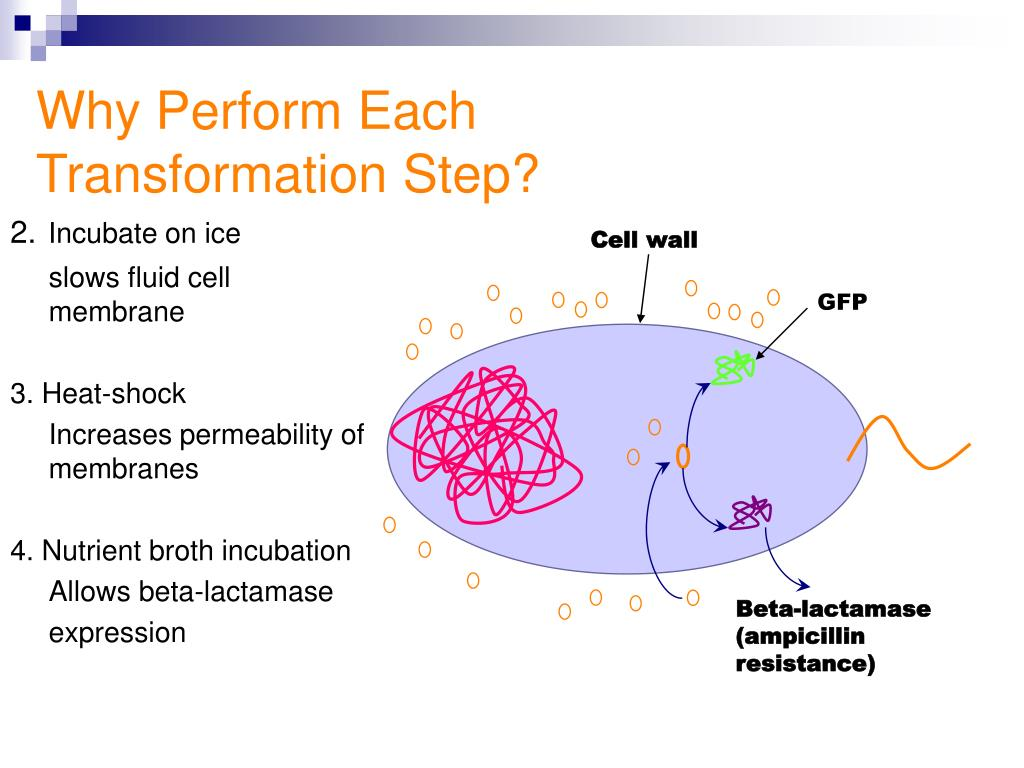 Why Perform Each Transformation Step?