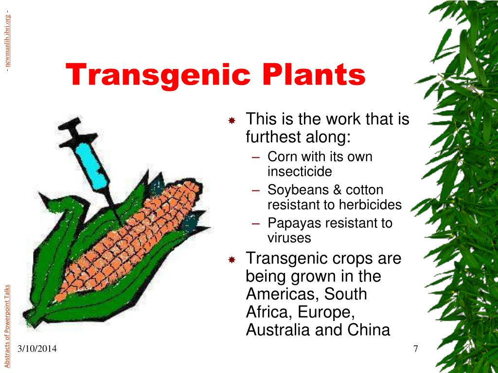 transgenic plants Transgenic plants are plants that have been genetically engineered, a breeding approach that uses recombinant dna techniques to create plants with new characteristicsthey are identified as a .