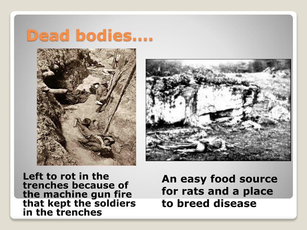 Left to rot in the trenches because of the machine gun fire that kept the soldiers in the trenches