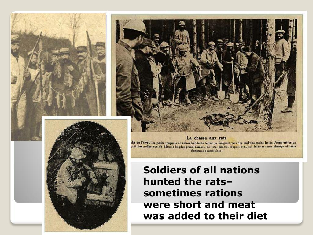 Soldiers of all nations hunted the rats– sometimes rations were short and meat was added to their diet