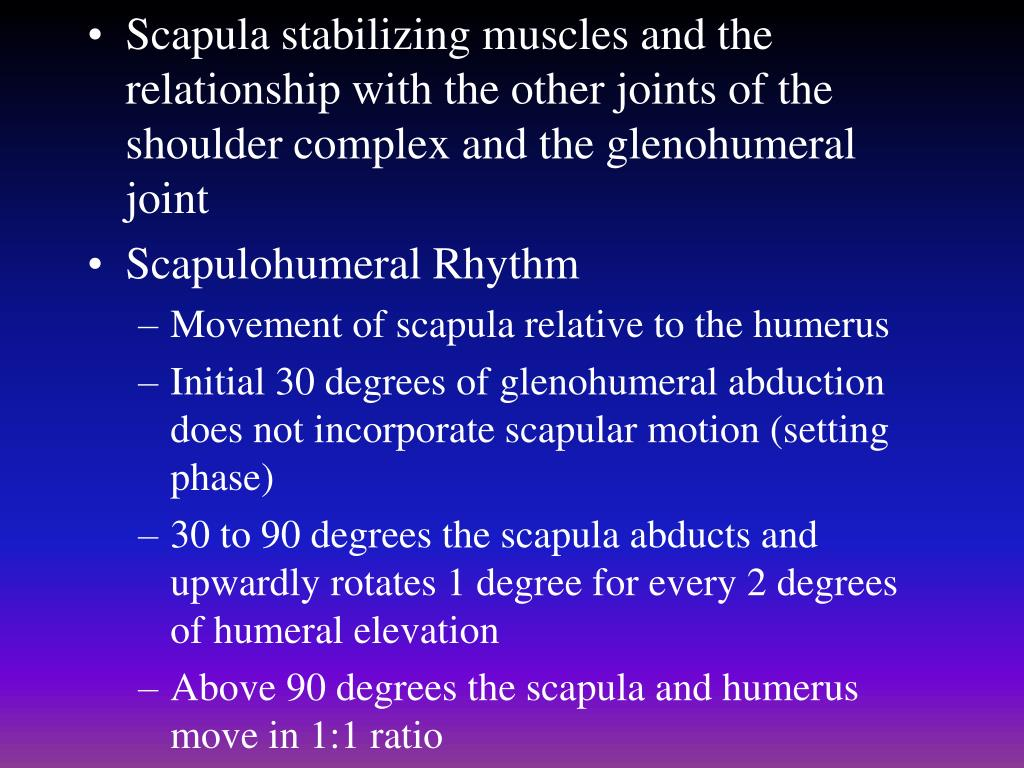 Scapula stabilizing muscles and the relationship with the other joints of the shoulder complex and the glenohumeral joint