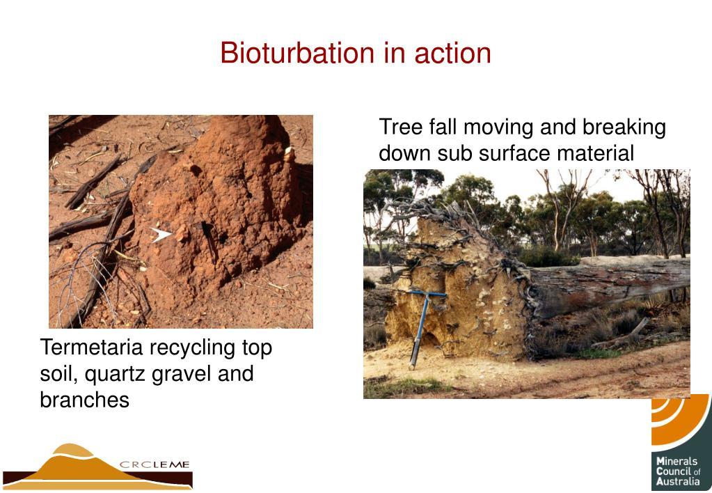 Bioturbation in action