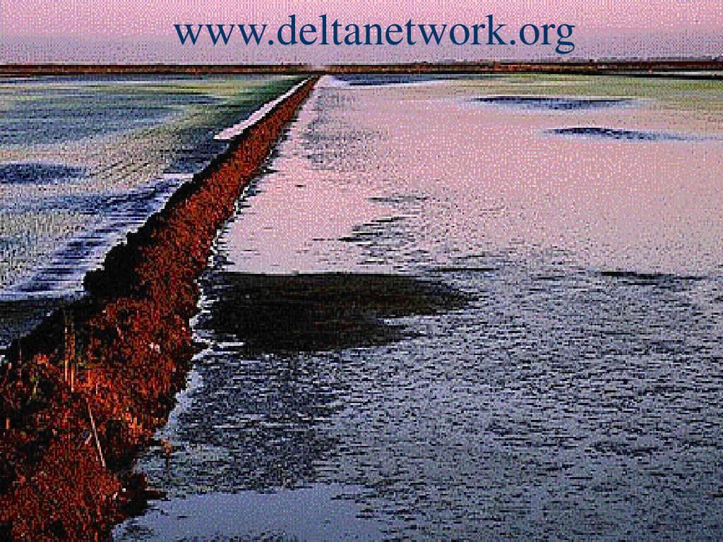 www.deltanetwork.org