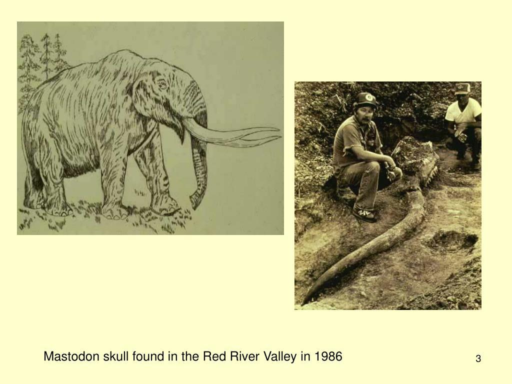 Mastodon skull found in the Red River Valley in 1986