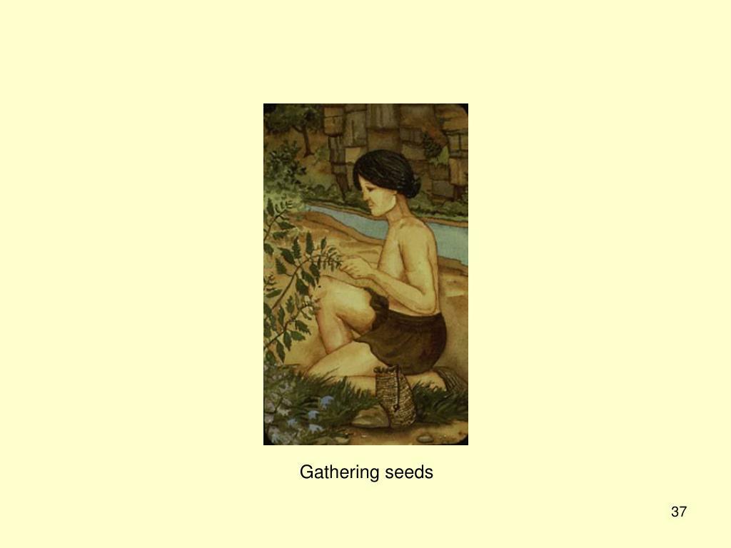 Gathering seeds