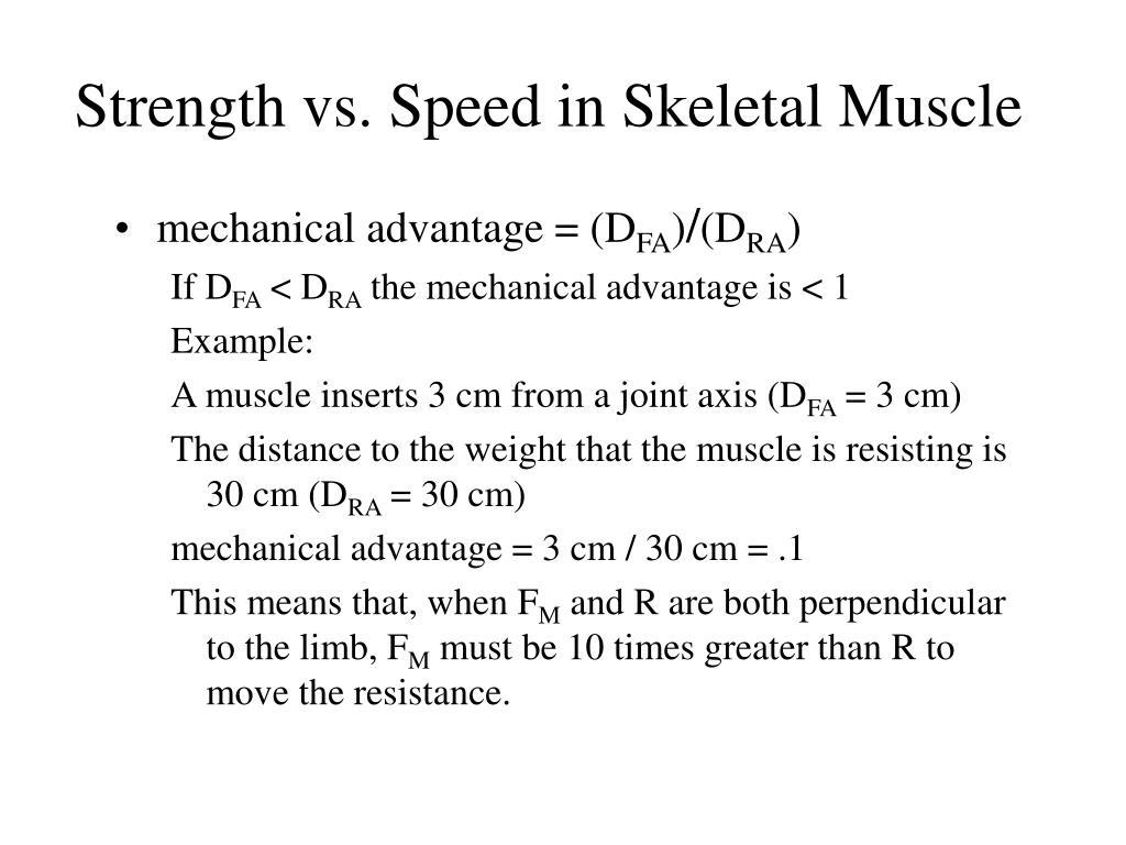 Strength vs. Speed in Skeletal Muscle