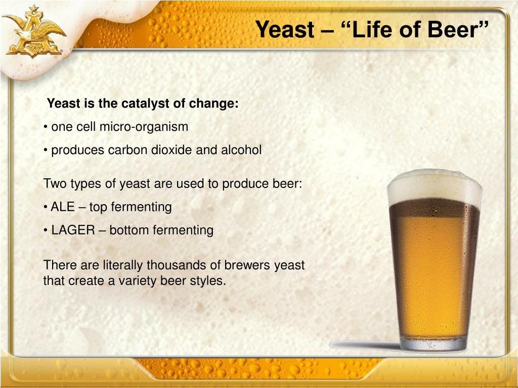 """Yeast – """"Life of Beer"""""""
